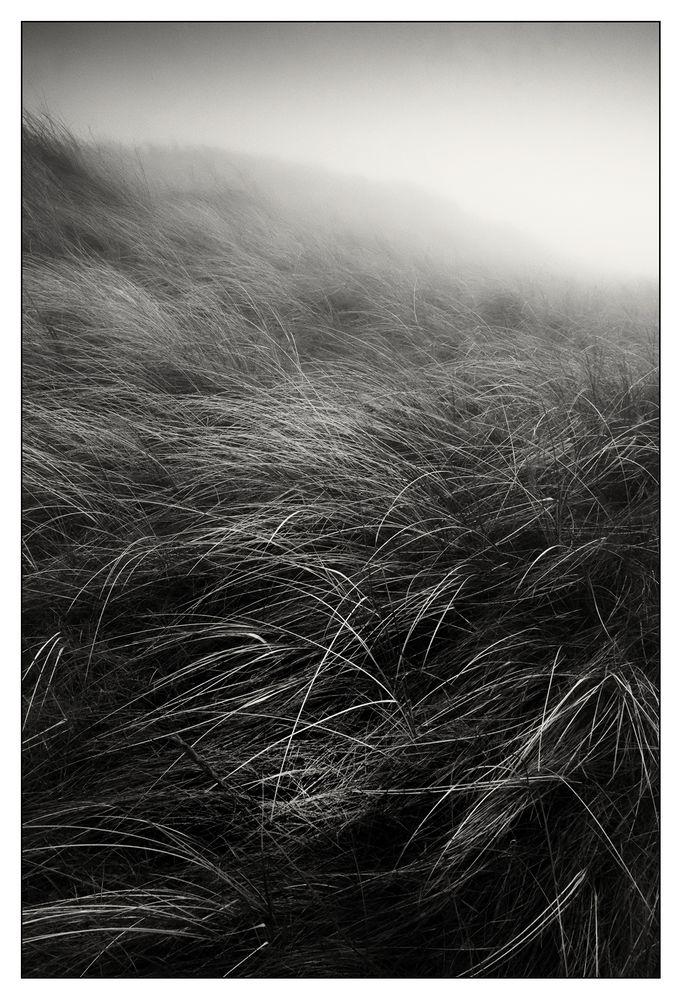 Dunes in Fog