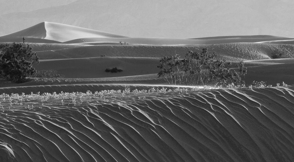 Dunes in the Desert