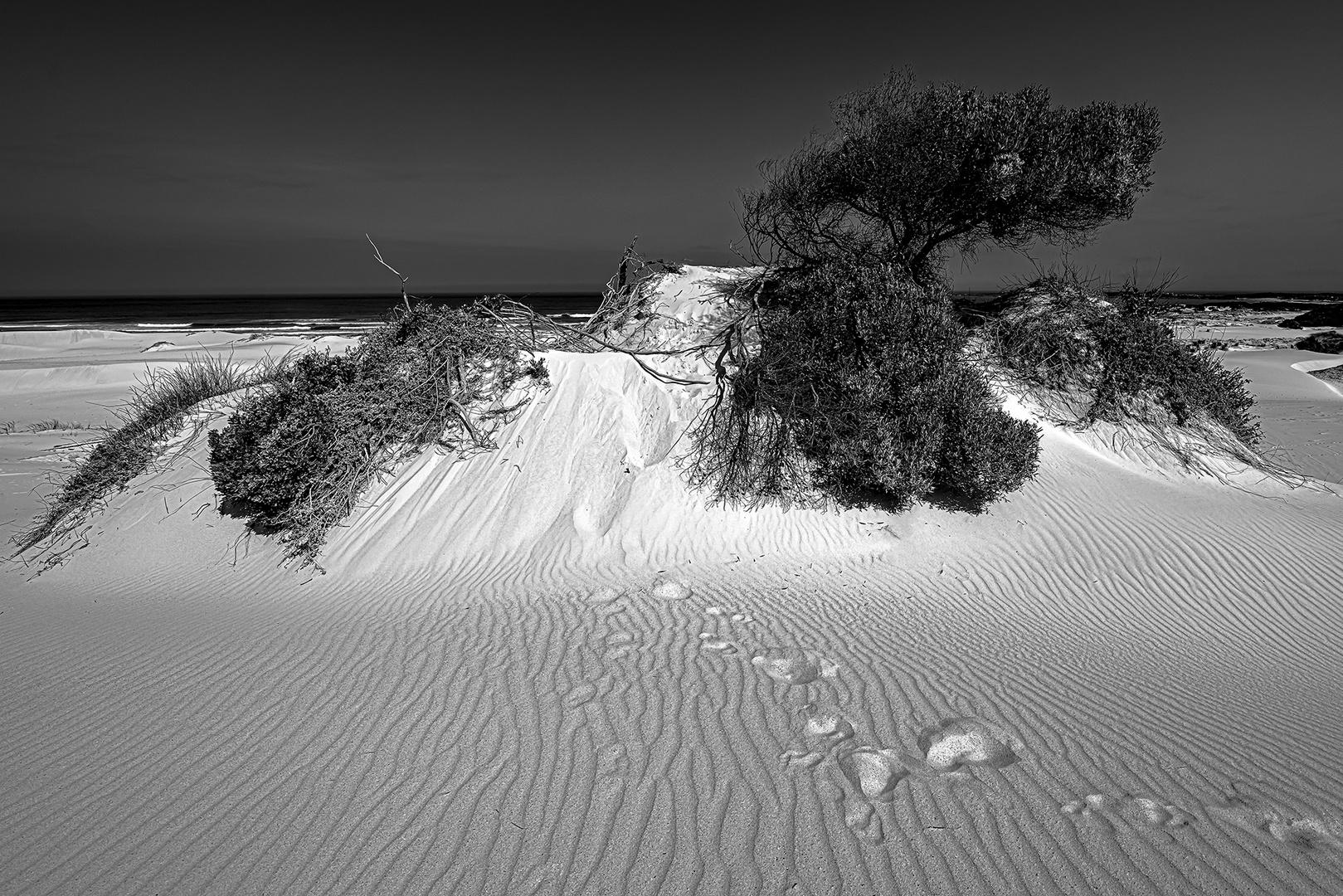 Dunes near Bettys Bay South Africa