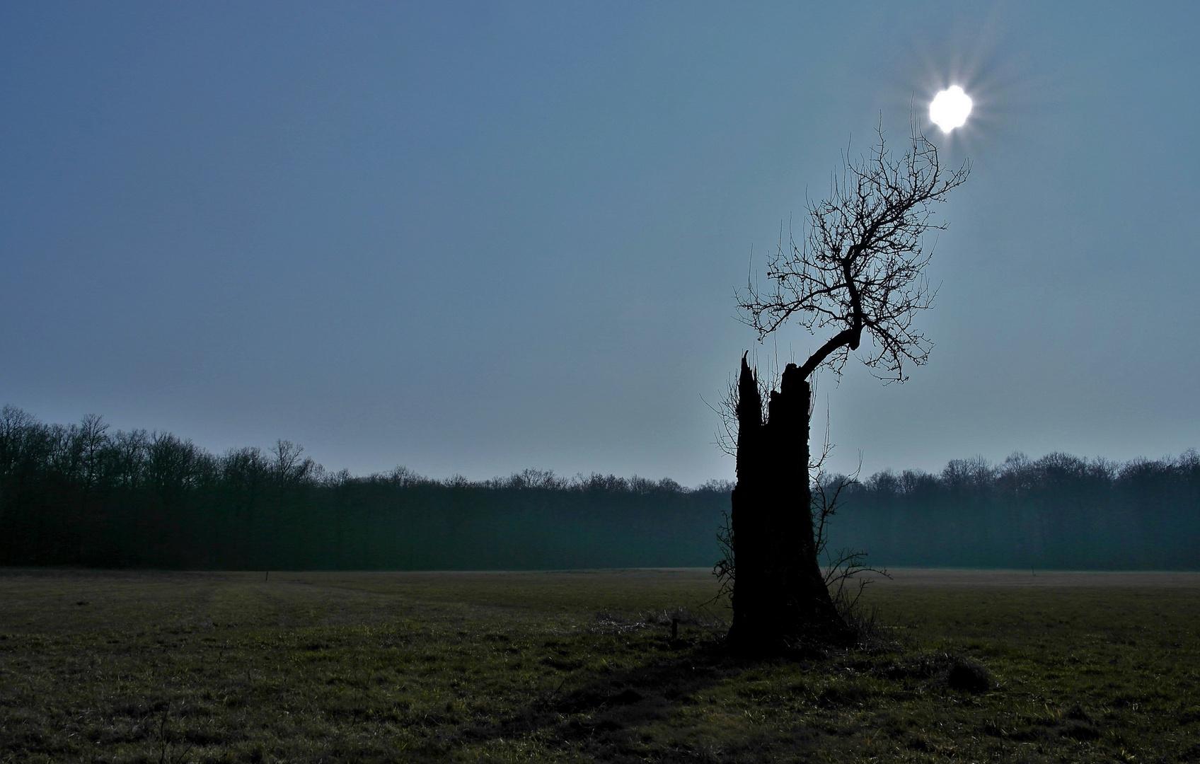 Dunkler Baum