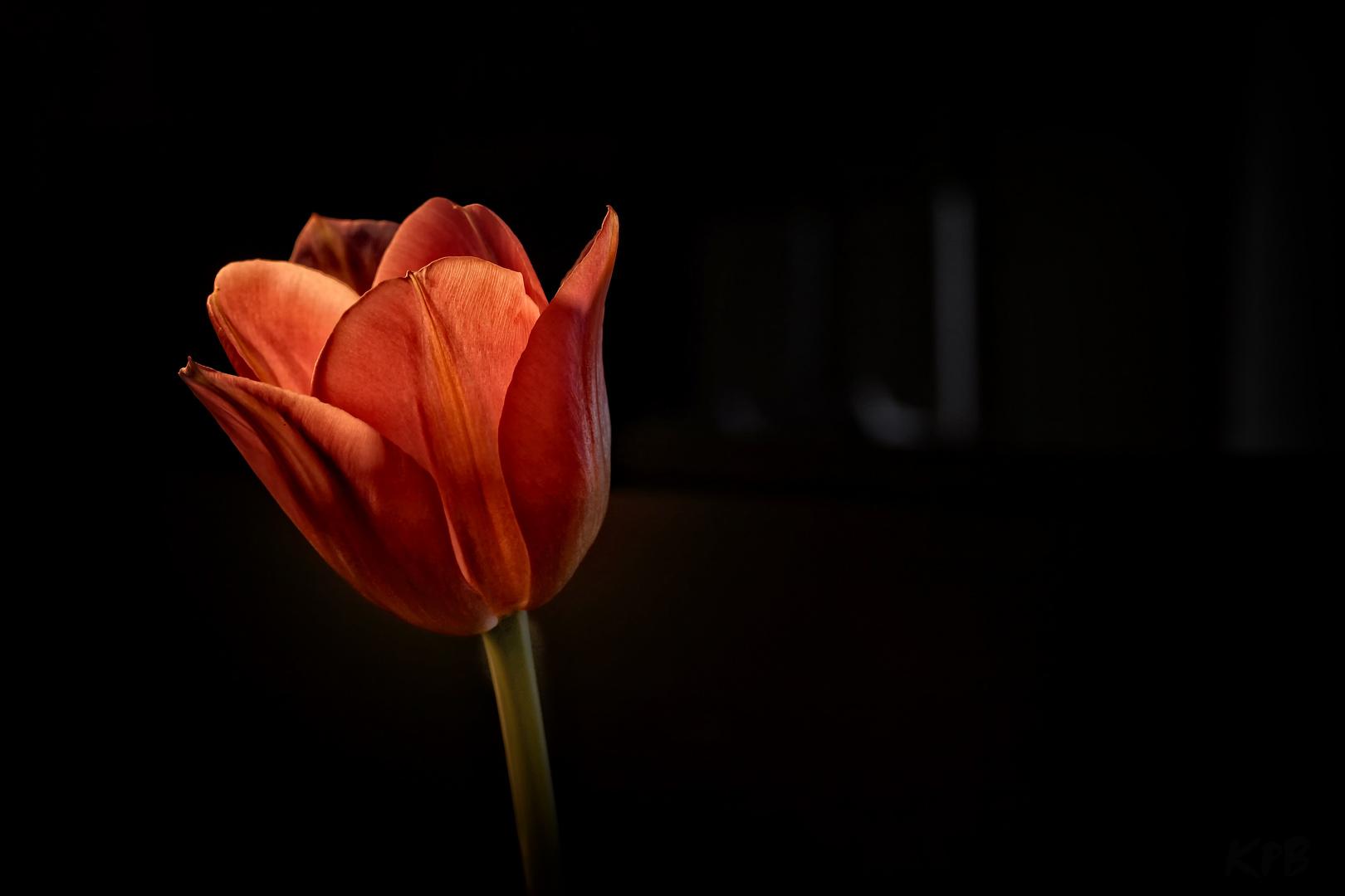 Dunkler Raum Foto Bild Pflanzen Pilze Flechten Blüten