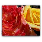 Duo de rosas