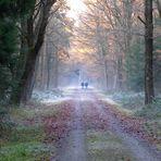 Durch den frostigen Wald