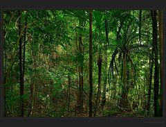 Durch den Regenwald...