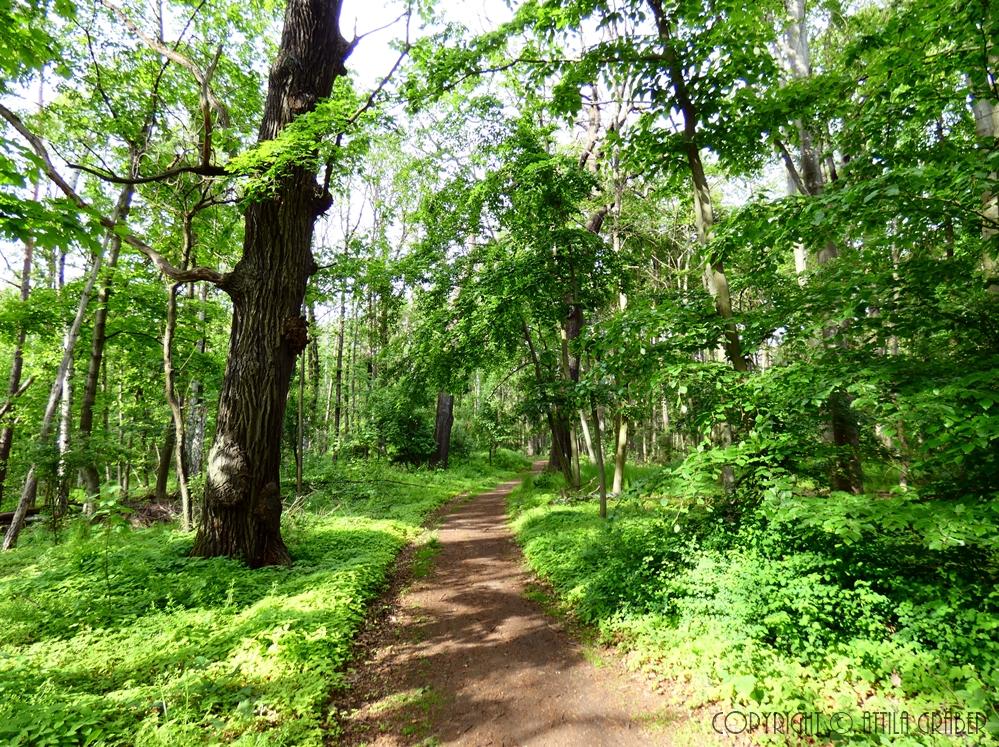 durch den Wald /