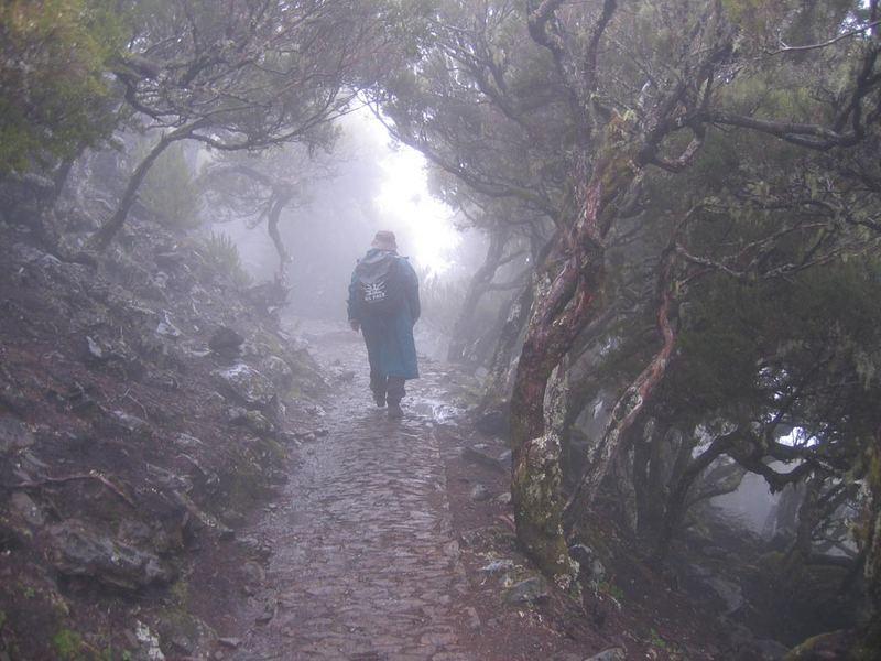 Durch den Wald auf Madeira