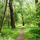 durch den Wald \