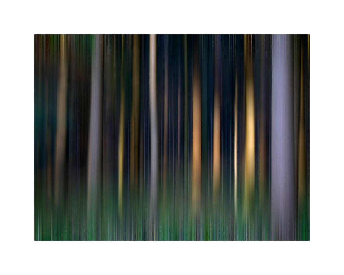 Durch den Wald gewischt