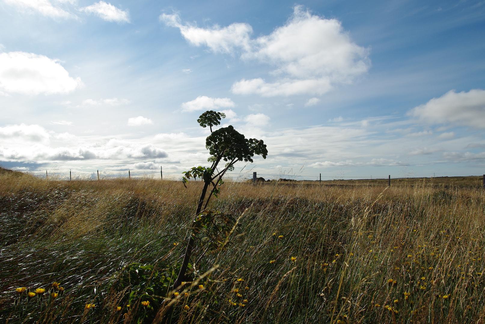 durch den Wind ... auf Snæfellsnes