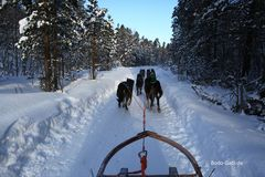 Durch den Winterwald