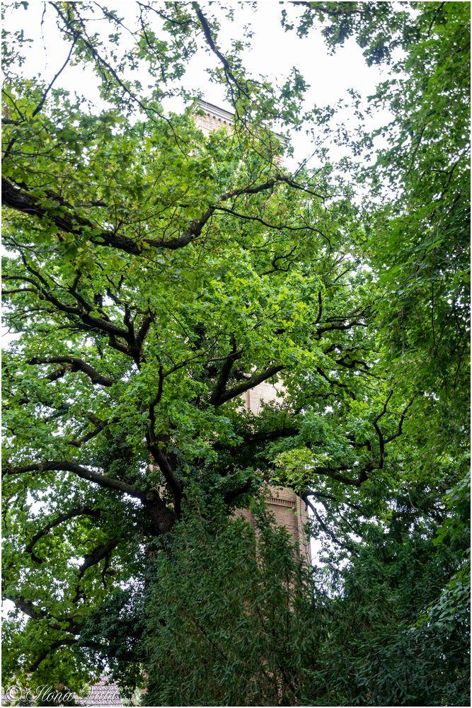 """Durch die """"Blume"""" gesehen: der Turm"""
