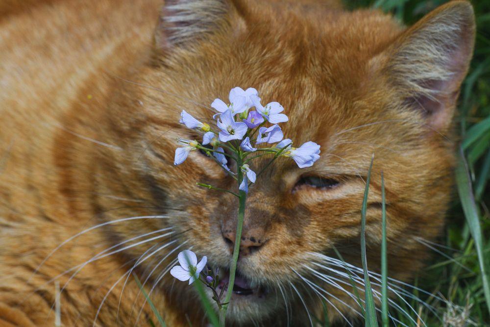 Durch die Blume gesprochen