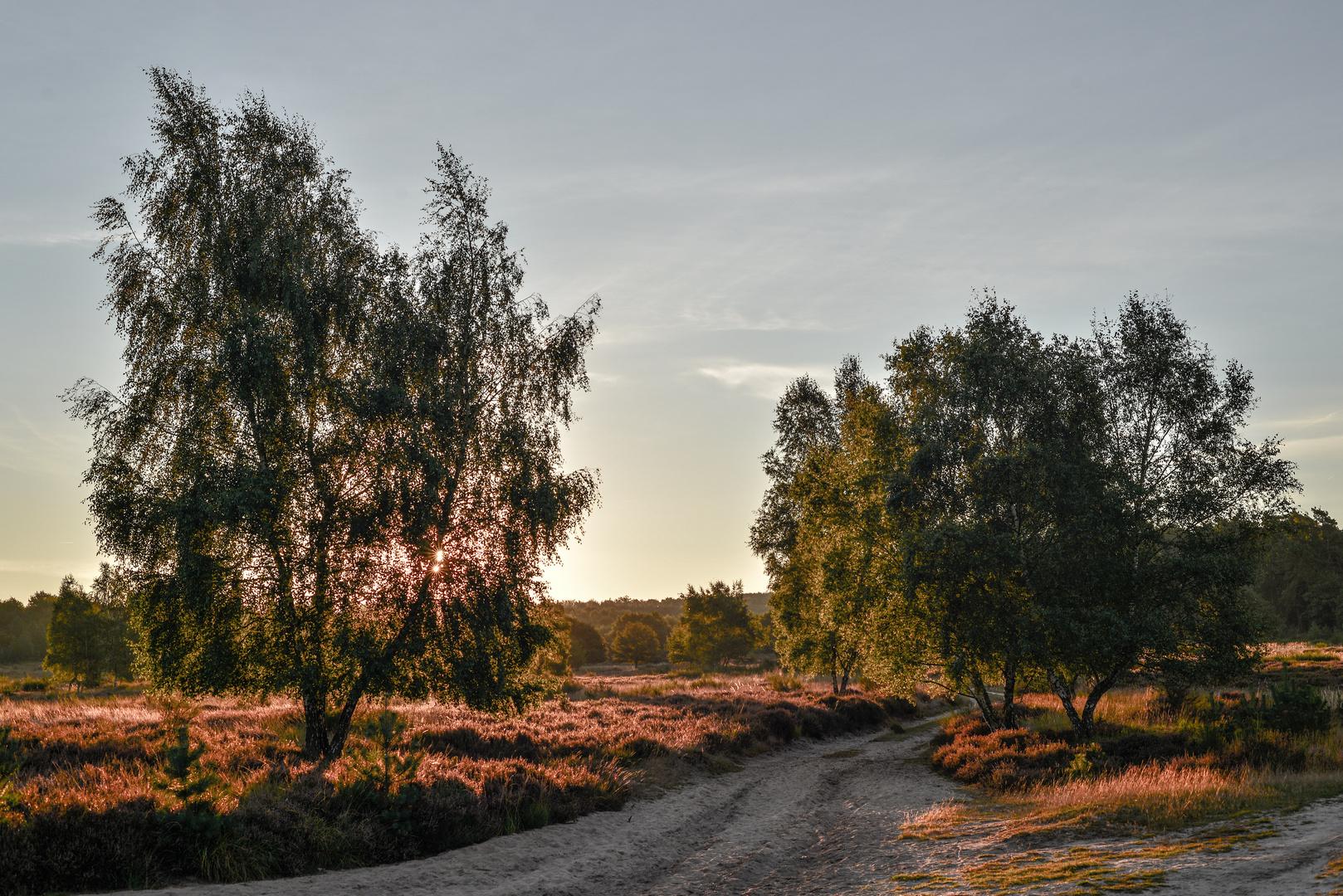 Durch die Heide