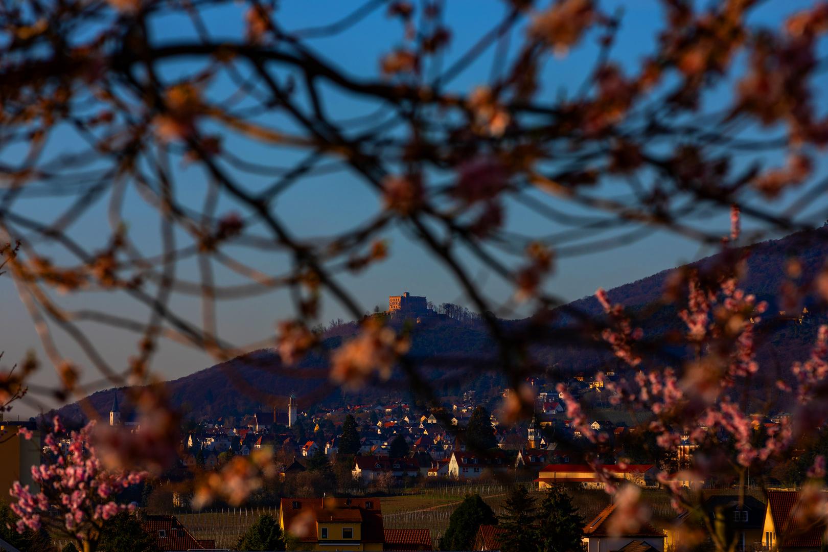 Durch die Mandel geschaut zum Hambacher Schloss