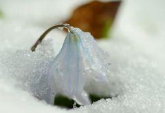 Durch die Schneedecke