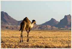 Durch die Wüste....