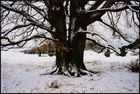 Durch kahlen Baumes Astgeflecht.......