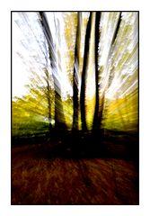 Durch nackte Zweige fährt der Wind.