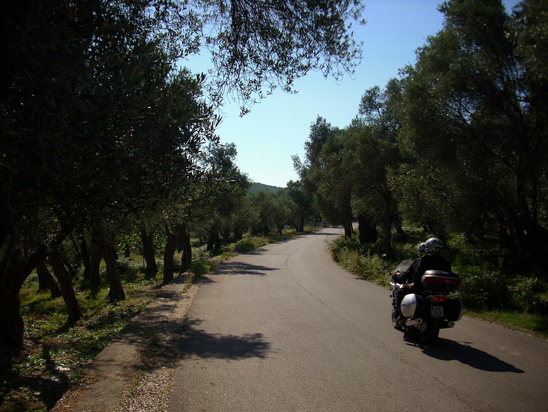 Durch Olivengarten fahren