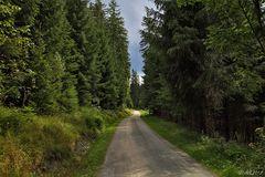 Durch Vogtlands Wälder ...