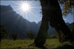 Durchblick-Baum