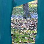 Durchblick in den Frühling