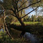 Durchblick zu den Okerwiesen