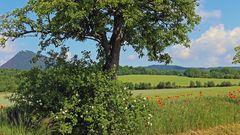 Durchblick zum Milleschauer, der Königin des Böhmischen Mittelgebirges