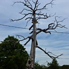 Durchgestrichene Baum-Laterne
