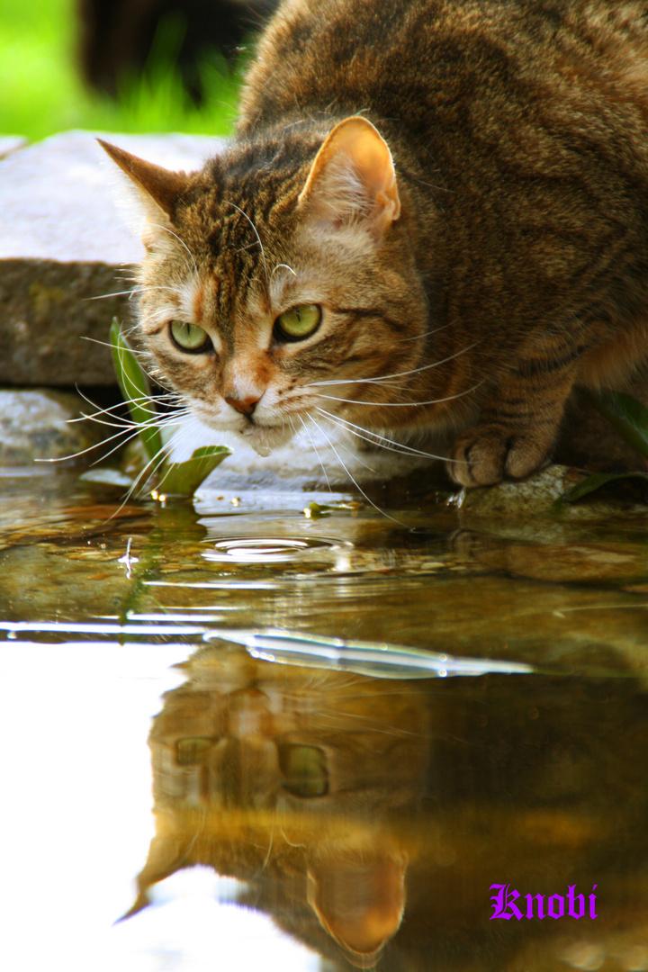 Durst stillen......