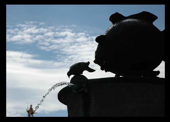 Durstige Taube!