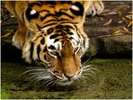 Durstiger Tiger - part three -
