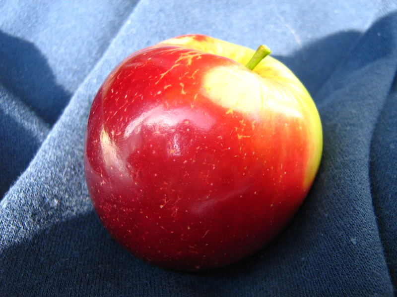 dying apple