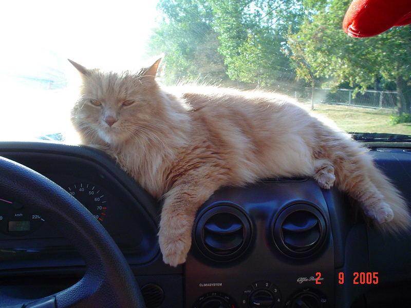 Dzikas wieder im unserem Auto:)