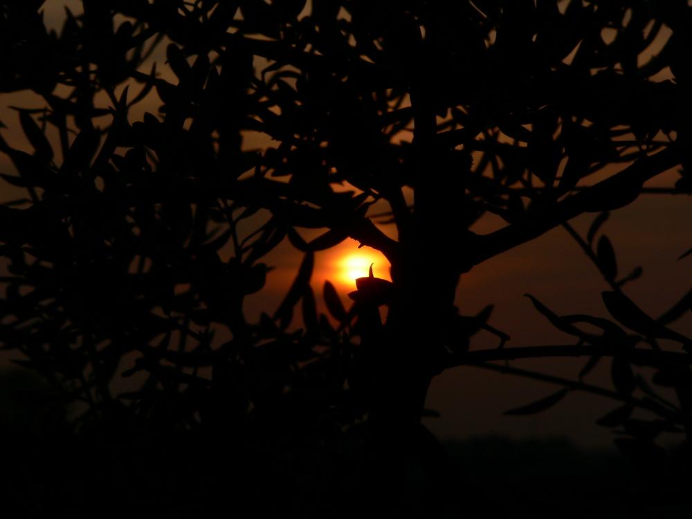 E come il sole tutto ......pian piano arriverà