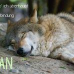e-lan