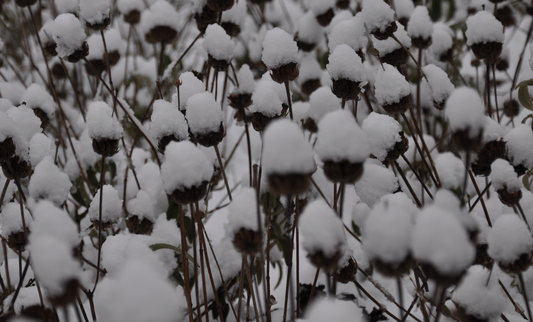 E' nevicato