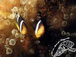... E non chiamateci Nemo !!!
