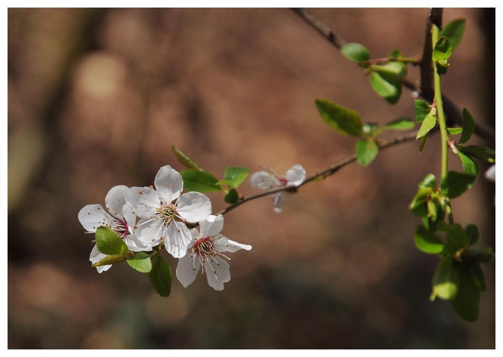 E' Primavera... finalmente|