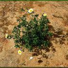 .... è primavera sulla sabbia.....