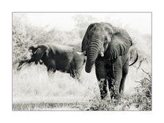 E, wie Elefant