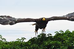 Eagle 380