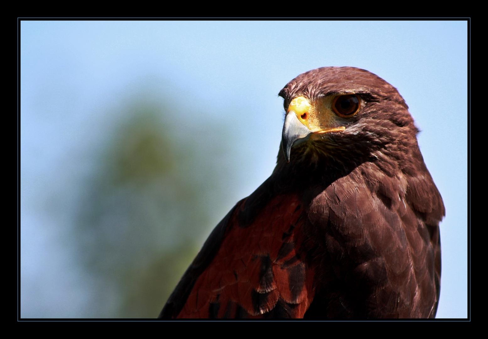 eagle eye ..