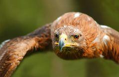 Eagle Flight .....