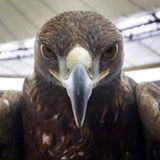 Eaglejoe73