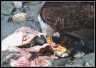 Eagles Feast