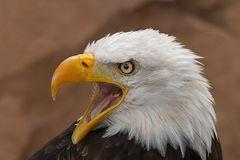 Eagle's Scream