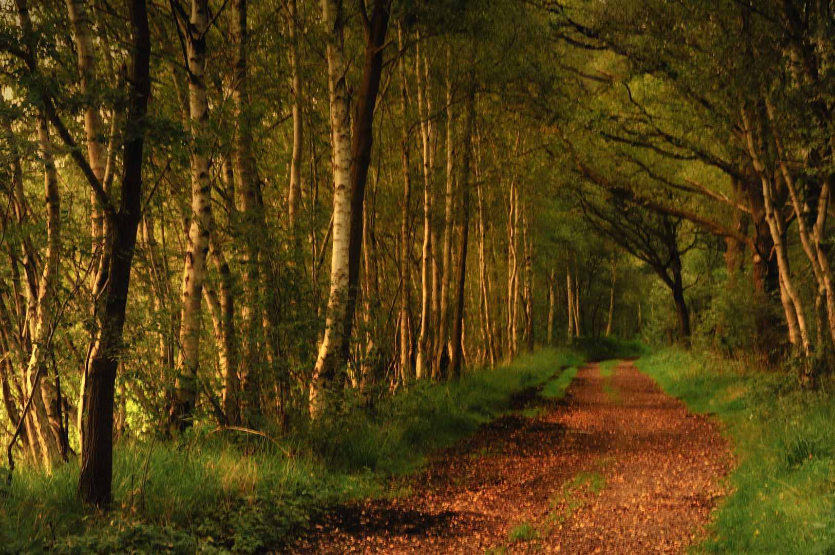 early autumn forest light