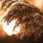 Early Golden Winter Sunset 1
