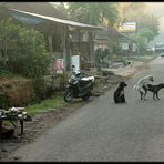 Early morning activities on Bali, the Island of Gods ;-))).